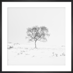 Solitude by Doug Chinnery