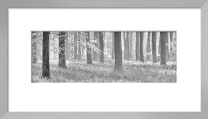 Woodland Dawn by Doug Chinnery