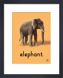elephant by Ladybird Books'