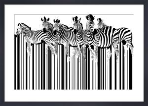 Zebras by Sassan Filsoof