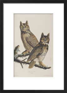 Owls by John James Audubon