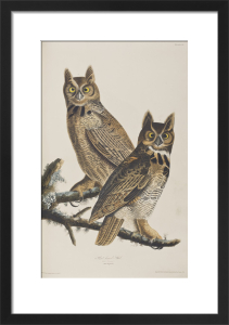 Owls by John James Audubon
