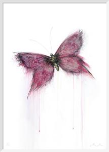 Velvet by Marion McConaghie