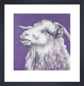 Sheep on Purple by Nicola King