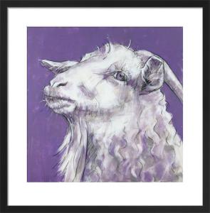 Sheep on Purple by Nicola King