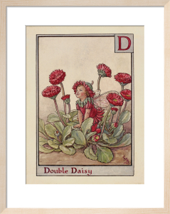 Double Daisy Fairy by Cicely Mary Barker
