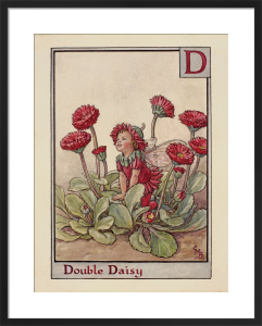 Double Daisy Fairy by Cicely Mary Barker