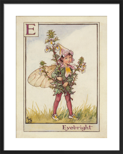 Eyebright Fairy by Cicely Mary Barker