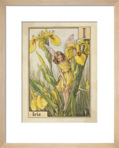 Iris Fairy by Cicely Mary Barker
