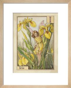 Iris Fairy by Cicely Mary Barker