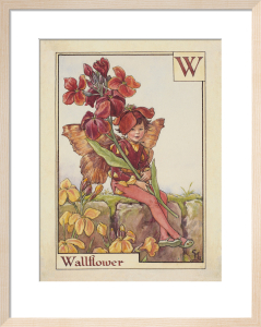 Wallflower Fairy by Cicely Mary Barker