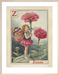 Zinnia Fairy by Cicely Mary Barker