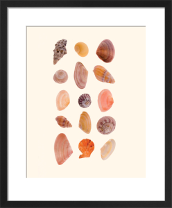 Collection of Shells by Deborah Schenck