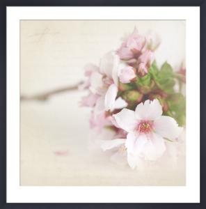 May Blossom by Deborah Schenck