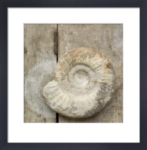 Nautilus Fossil by Deborah Schenck