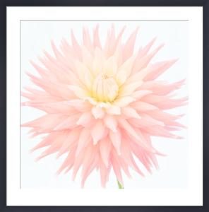 Star Flower by Deborah Schenck