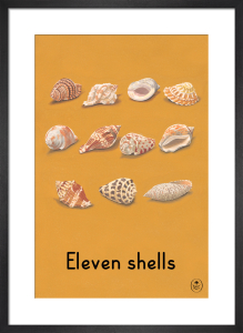 Eleven shells by Ladybird Books'