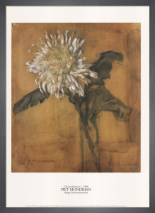 Chrysanthemum, c.1900 by Piet Mondrian