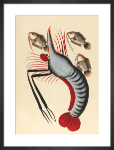 Prawn with three fishes, c.1940 by Unknown artist
