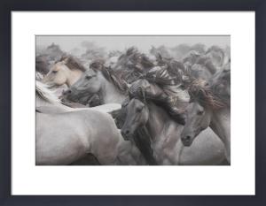 Wild Horses by Dieter Uhlig