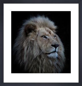 Proud Lion by Louise Wolbers
