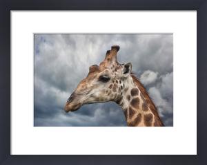 Giraffe Portrait by Mario Moreno