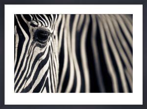 Eye & Stripes by Mario Moreno