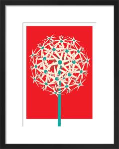 Allium by Simon C Page