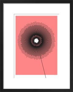 Poppy by Simon C Page