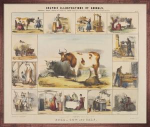 The Bull, Cow and Calf by Benjamin Waterhouse Hawkins