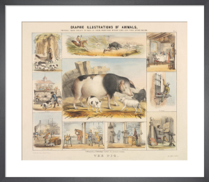 The Pig by Benjamin Waterhouse Hawkins