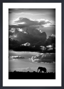 He Walks Under an African Sky by WildPhotoArt