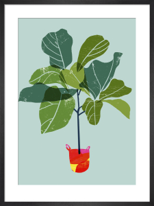 Fiddle Leaf Fig Tree by Ana Zaja Petrak