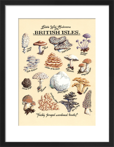 Edible Wild Mushrooms by Kelly Hall