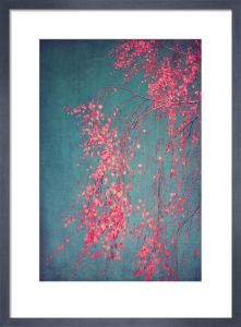 Whispers of Pink by Ingrid Beddoes