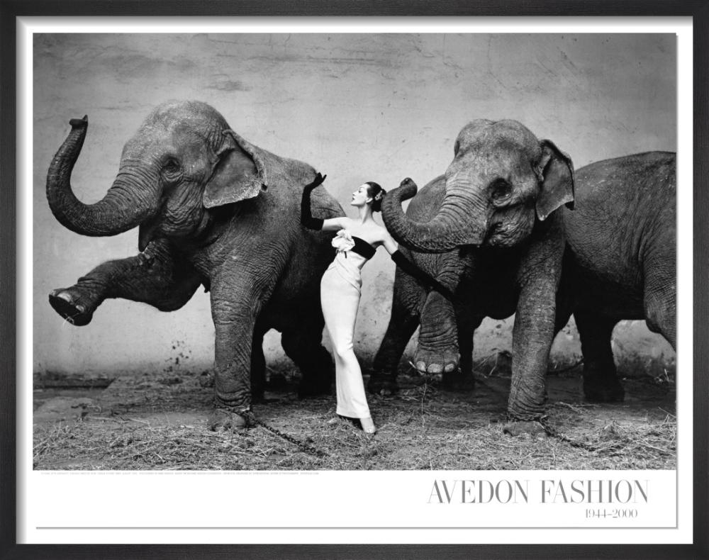 Dovima with elephants, 1955 by Richard Avedon