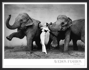 Dovima with elephants, 1955 by Richard Avedon