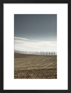 Tuscan Poplars by Scott Dunwoodie