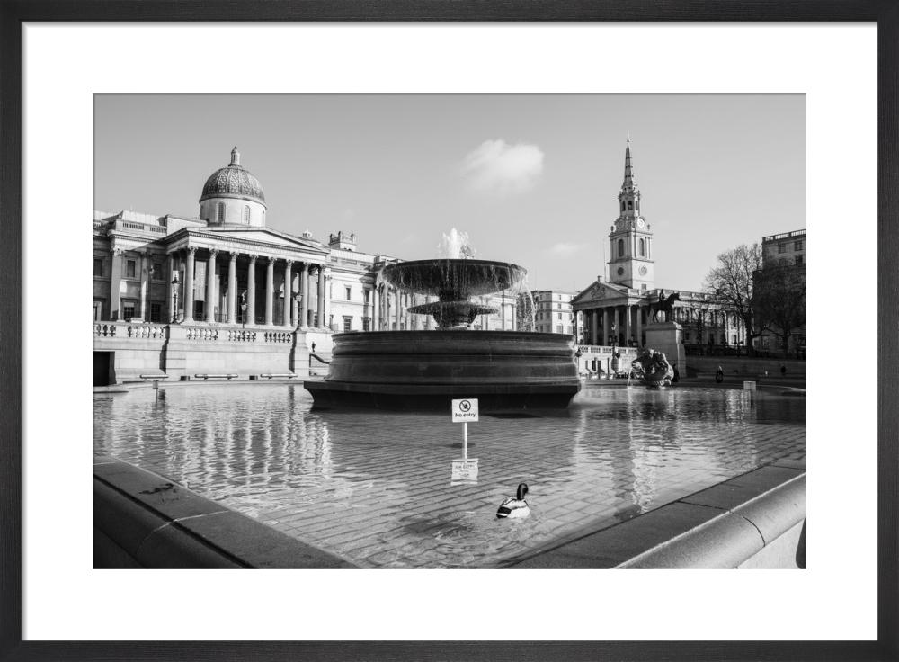 Spring Morning, Trafalgar Square by Niki Gorick