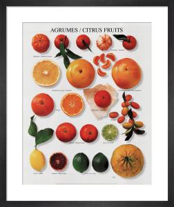 Citrus Fruits by Atelier Nouvelles Images