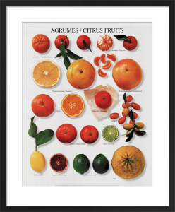 Citrus Fruits by Atelier