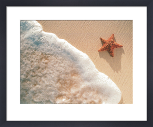 Starfish by Stuart Black