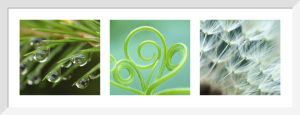 Nature en vert (triptyque) by Michael Peuckert