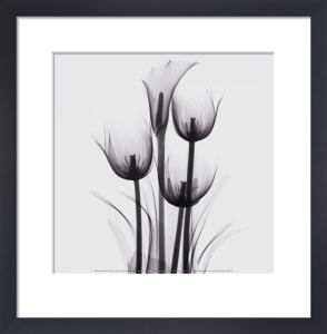 Tulipes et arum by Marianne Haas