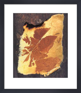 Amber Leaf by Ronnie Leckie