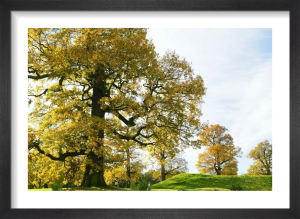 Autumn Oaks by Richard Osbourne