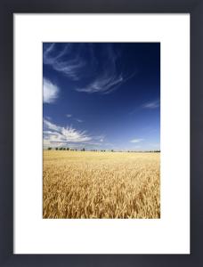 Wheat Field And Wind Farm by Richard Osbourne