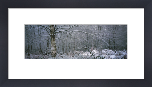 Winter Woodland I by Richard Osbourne
