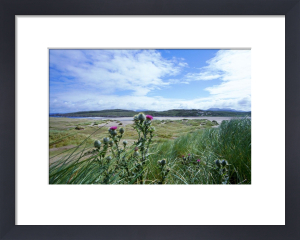 Scottish Thistles by Richard Osbourne