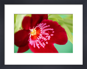 Red Orchid by Richard Osbourne